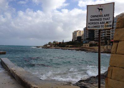 für Pferde schwimmen verboten